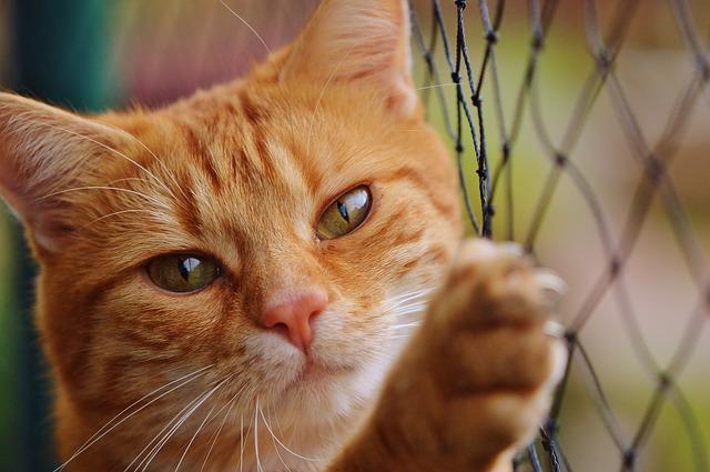 kočka u sítě